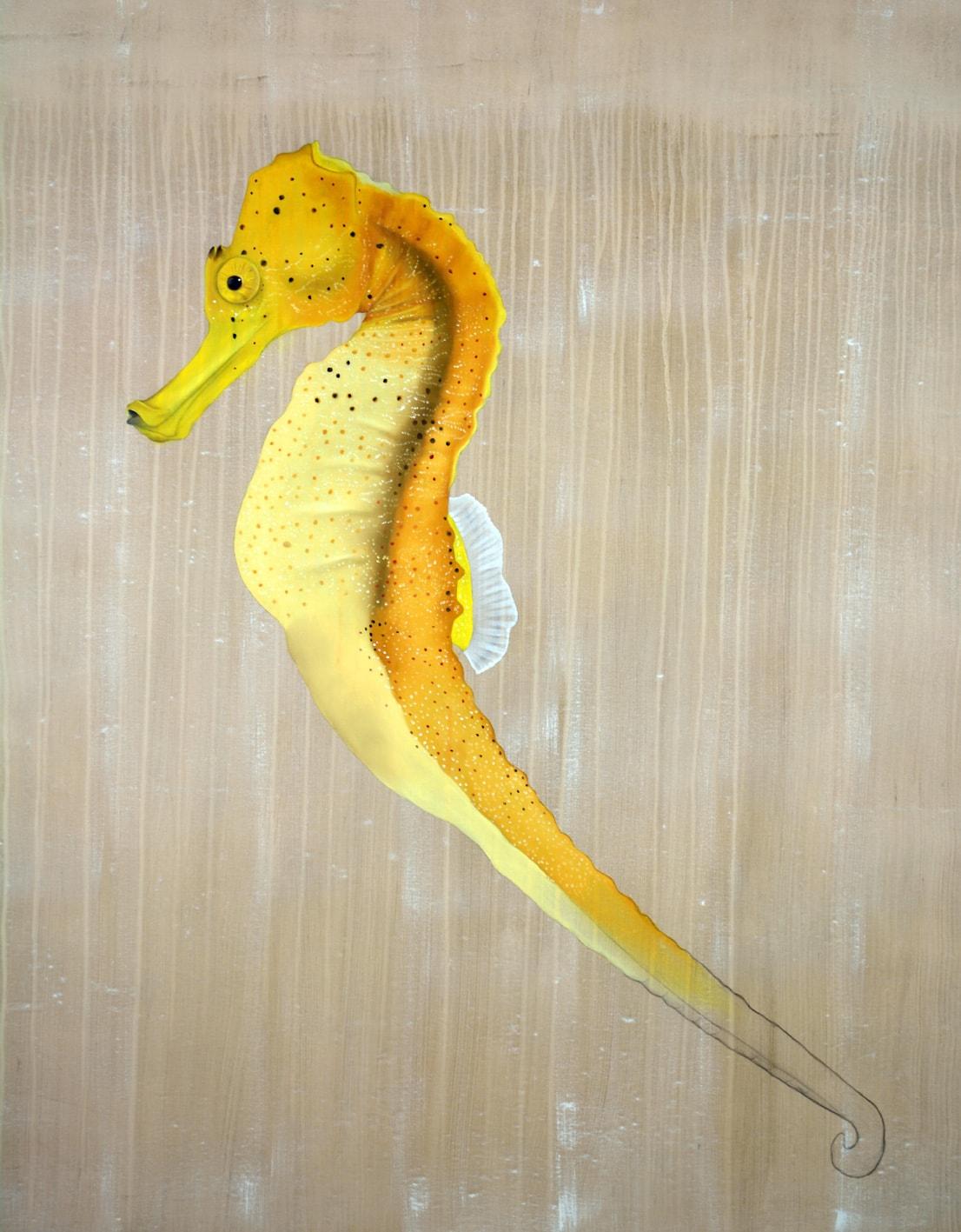Hippocampus Guttulatus Thierry Bisch photographer Clementine de Forton Gallery