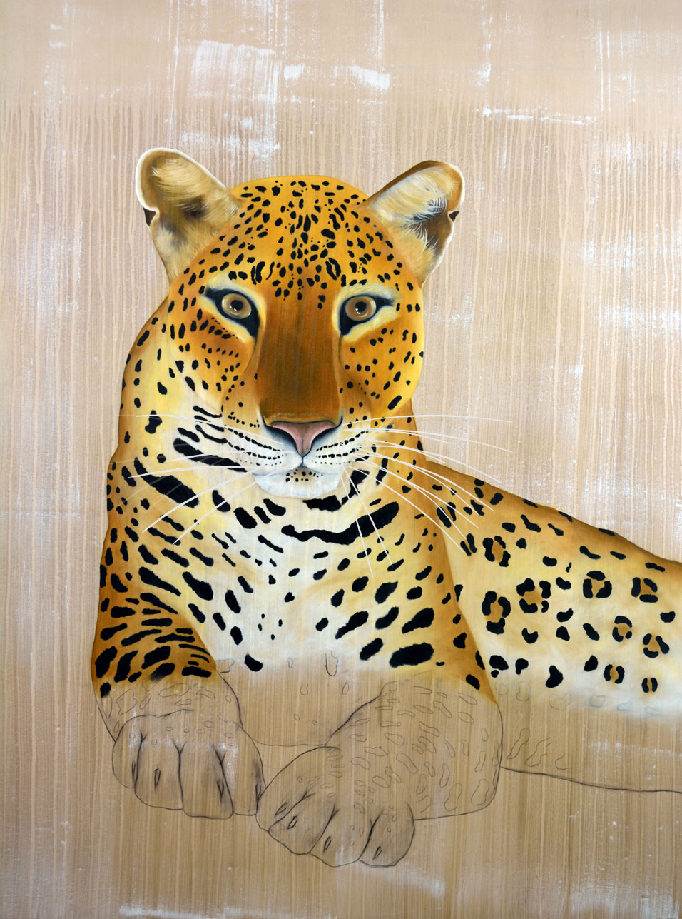 Panthera Pardus Panthera Thierry Bisch photographer Clementine de Forton Gallery