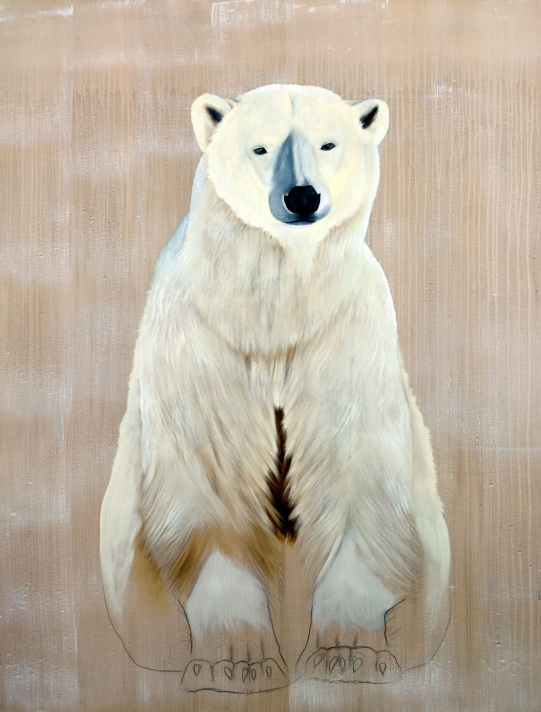 polar bear thierry bisch photographer clementine de forton gallery