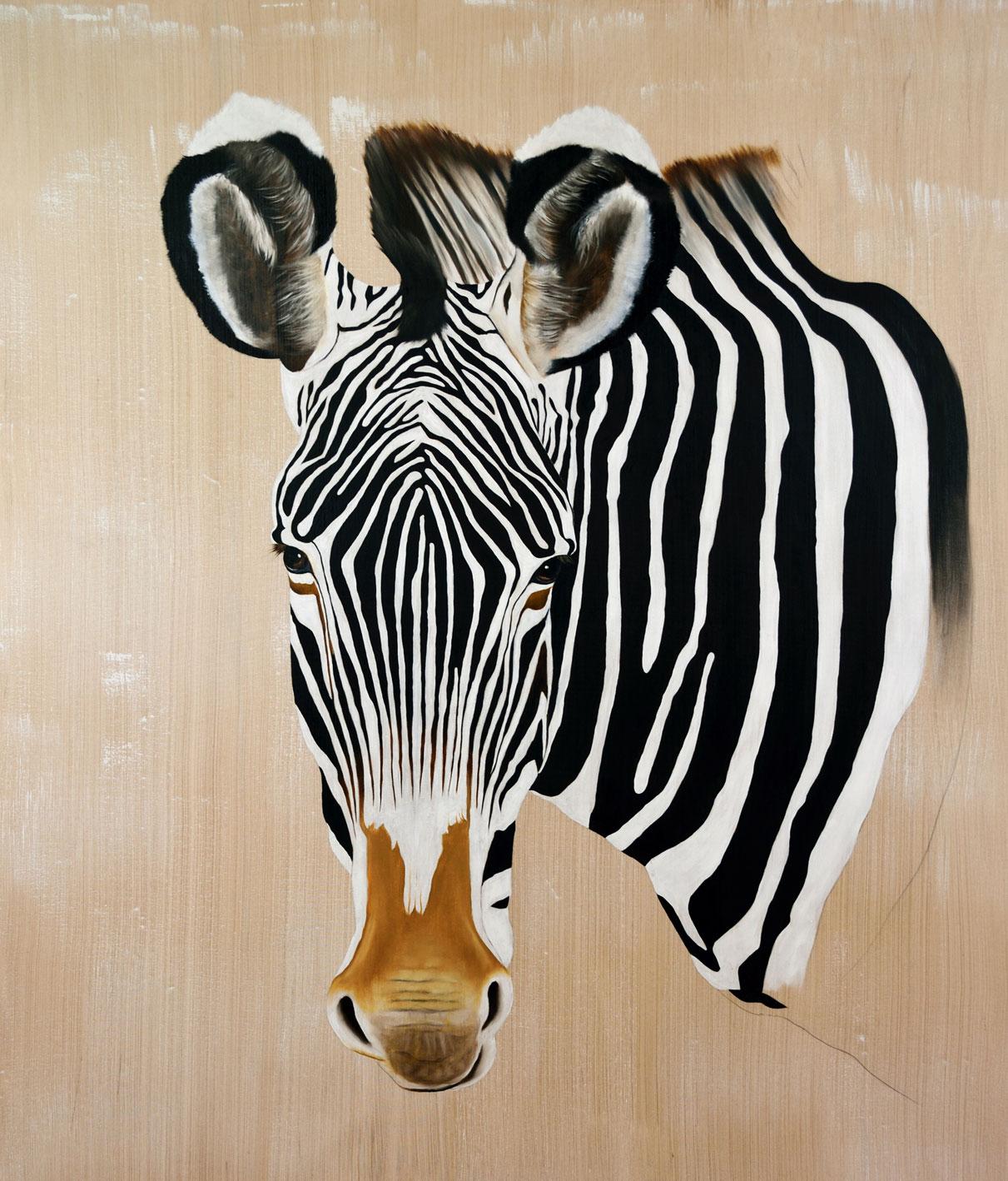 Equus Grevyi Thierry Bisch photographer Clementine de Forton Gallery