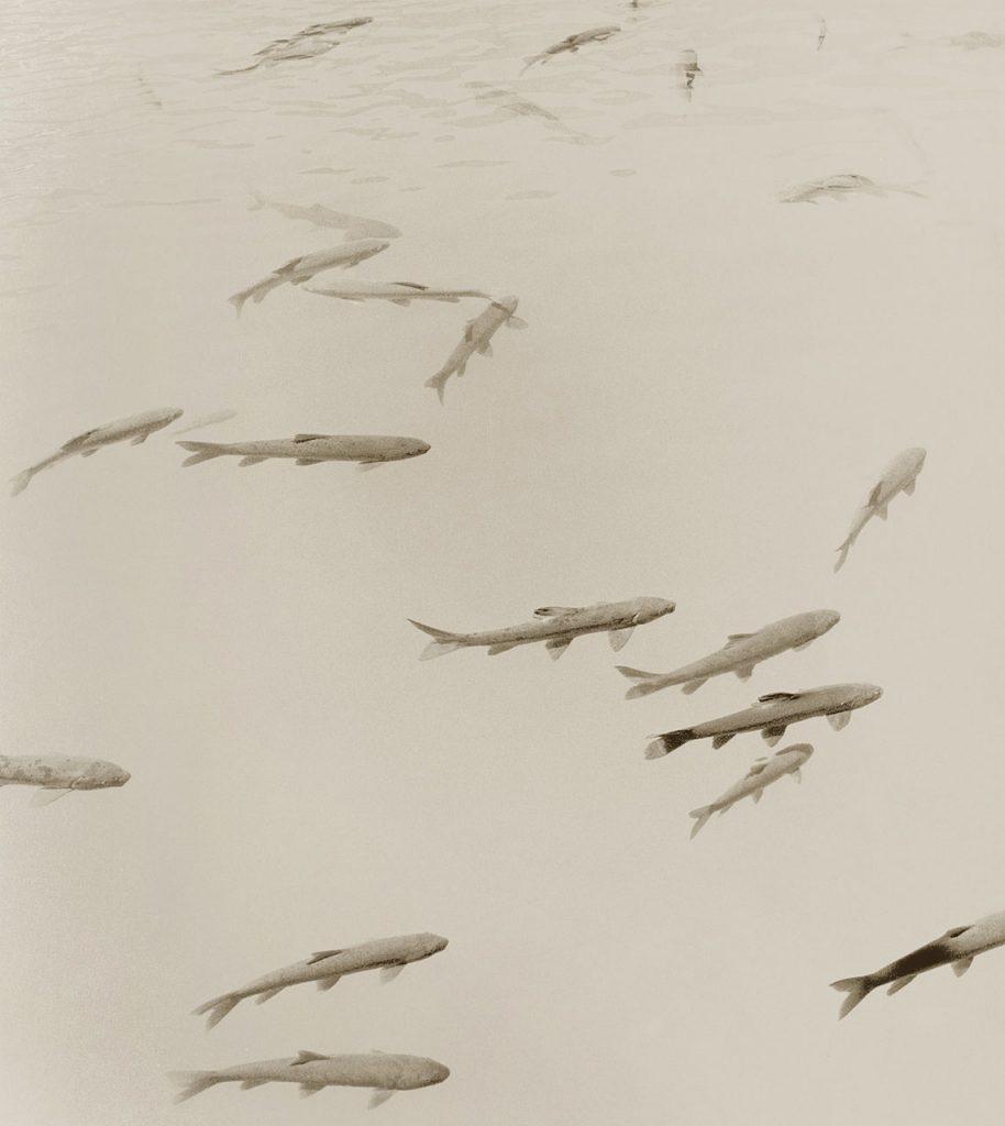 carp photography stuart redler clementine de forton gallery